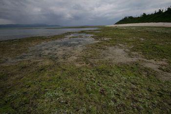 100327黒島アーサーの浜.jpg